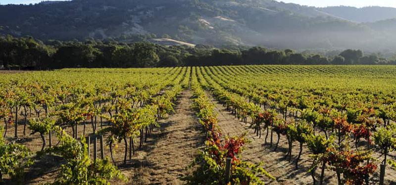Pinot Noir America Vineyard