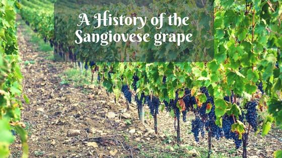 Montemaggio Grape Varieto